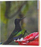 Mister Santa Pants    Mindo Hummingbird Wood Print by Al Bourassa
