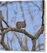 Mister Squirrel Wood Print