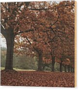 Misty Colours Of Autumn Wood Print