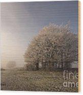 Misty Morn Wood Print
