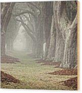 Misty Morning Avenue Of Oaks Wood Print