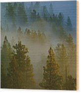Misty Morning In The Pines Wood Print