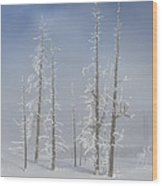 Misty Morning In Yellowstone National Park Wood Print