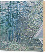 Misty Morning With Apple Blossoms And Redwoods Wood Print