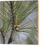 Misty Pines In Spring 2013 Wood Print