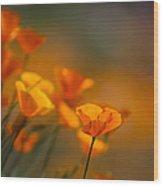 Misty Poppies Wood Print
