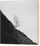 Misty Tree Glen Etive Wood Print by John Farnan
