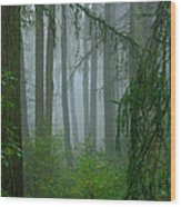 Misty Woodland Wood Print