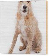 Mixed Breed Large Scruffy Dog Wood Print