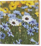Mixed Daisies Wood Print
