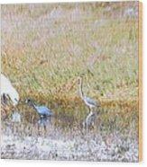 Mixed Shore Birds Wood Print