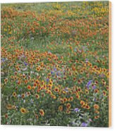 Mixed Wildflowers Blowing Wood Print