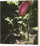 Moccasin Flower Wood Print