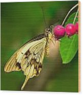 Mocker Swallowtail Butterfly And Berries Wood Print