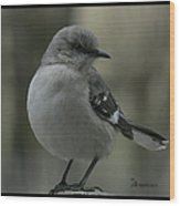 Mocking Bird Cuteness - Featured In Wildlife Group Wood Print