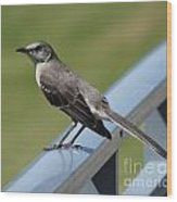 Mockingbird Perched Wood Print