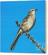 Mockingbird Wood Print by Robert Bales