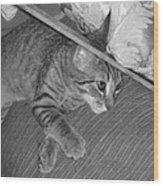 Model Kitten Wood Print