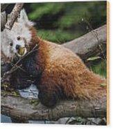 Mohu Eats Bamboo Wood Print