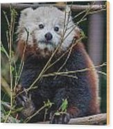 Mohu The Teenage Red Panda Wood Print
