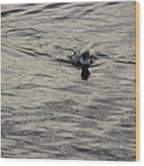 Moire Silk Water And A Long Tailed Duck Wood Print