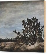 Mojave Desert Joshua Tree In Cima Wood Print