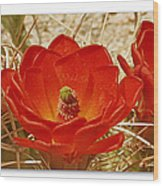 Mojave Mound Cactus Art Poster - California Collection Wood Print