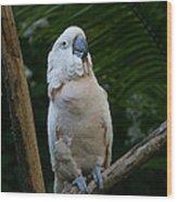 Moluccan Cockatoo Wood Print