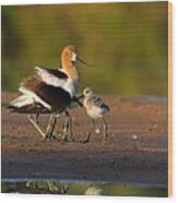 Mom And Baby Avocet Wood Print