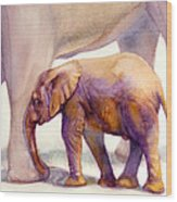 Mom And Baby Boy Elephants Wood Print