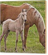 Mom And Foal Wood Print