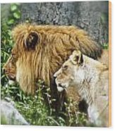 Mom And Pop Lion Wood Print