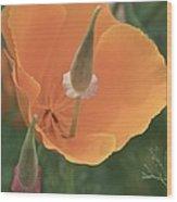 Mom And Poppy Wood Print