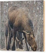 Mom And Young Moose Wood Print