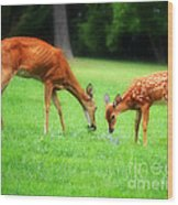 Mom Sharing A Snack With Her Baby Fawn Wood Print