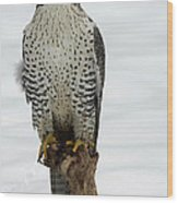 Moments Of Stillness Gyrfalcon In The Snow Wood Print by Inspired Nature Photography Fine Art Photography