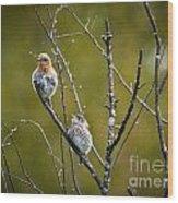 Momma Bluebird And Baby Wood Print