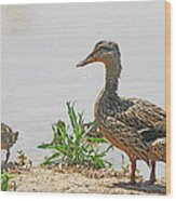 Momma Duck And Baby With A Different View Wood Print
