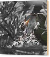 Momma Hummingbird Feeding Babies Wood Print by Old Pueblo Photography