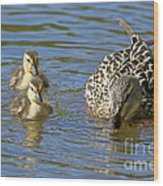 Momma Mallard And Her Ducklings Wood Print
