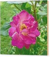 Mom's Beautiful Red Rose Wood Print