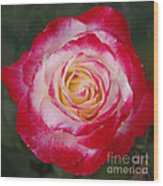 Mom's Red Rose  Wood Print