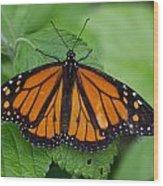 Monarch 3 Wood Print