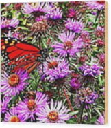 Monarch Among The Asters Wood Print