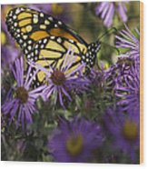 Monarch And Asters Wood Print