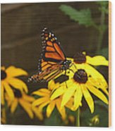 Monarch At Rest Wood Print
