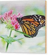 Monarch Beauty Wood Print