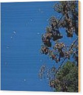 Monarch Butterflies Flying Wood Print