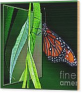Monarch Butterfly 04 Wood Print
