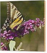Monarch Butterfly 3 Wood Print